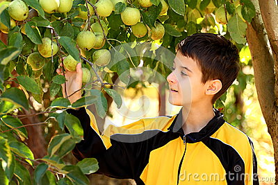 Boy in apple garden
