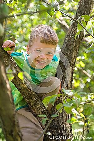 Boy on an apple tree