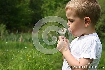 Boy blow dandelion