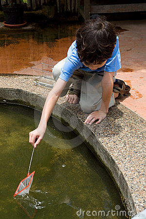 Boy catching little fish with a net