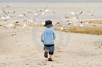 Boy child chasing seagulls at beach