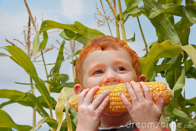 Boy child eating organic corn in garden