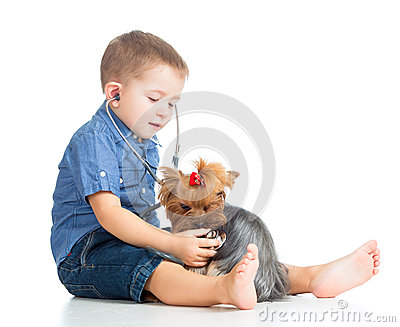 Boy child examining dog on white background