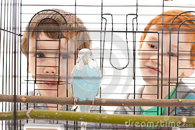 Boy children looking at pet budgerigar in cage