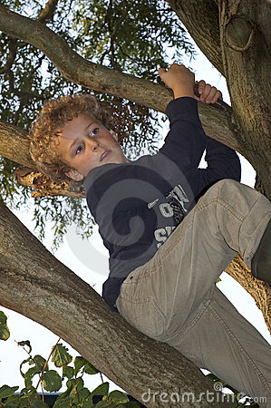 Free Boy Climbing In Tree Stock Photography - 6524982
