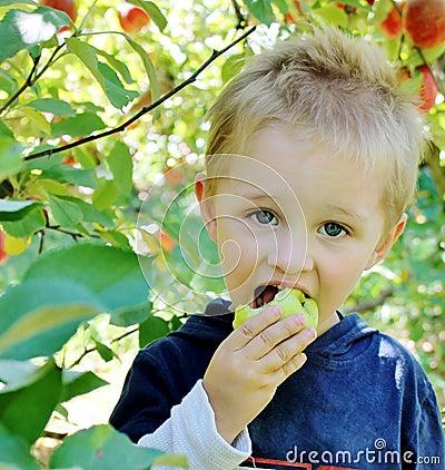 Free Boy Eating An Apple Royalty Free Stock Image - 43948746