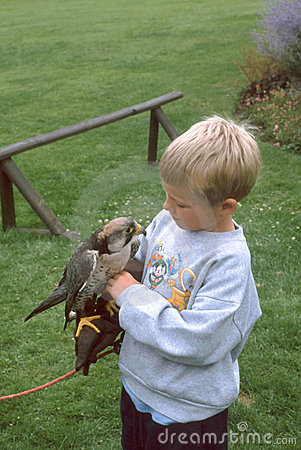 Boy with Falcon