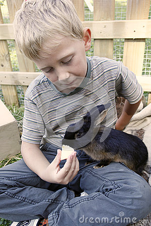 Boy feeding his pet rabbit