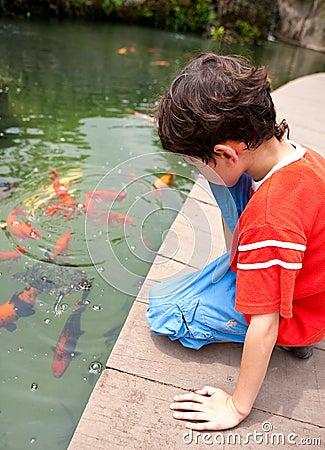 Boy feeding Japanese koi fish in tropical pond
