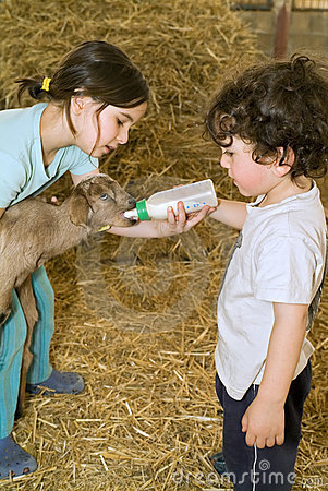 Boy and girl feeding bay goat