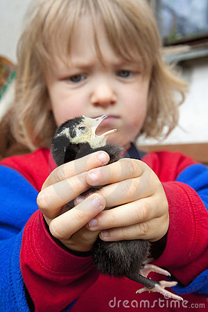 Boy holding a chick
