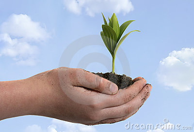 Boy holding seedling in cupped