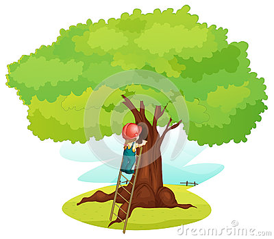 A boy and ladder under tree