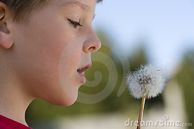 Boy Makes A Wish On A Dandelion