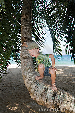 Boy on palm tree