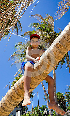 Boy on a palm tree