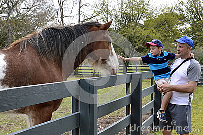 Boy patting horse