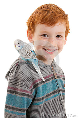 Boy with pet bird budgerigar on shoulder