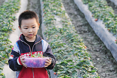 A boy picking strawberry