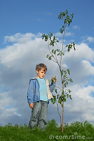 Boy plants the tree