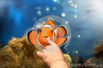 Boy playing with Nemo Clown fish