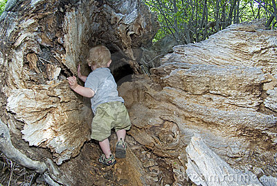 Boy plays in hollow tree