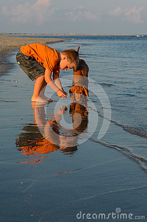 A boy and a puppy by the beach