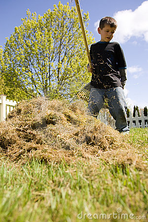 Boy raking grass