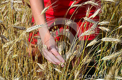 Boy in red clothes in corn, barley field