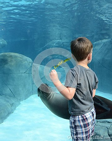 A boy and a sea lion