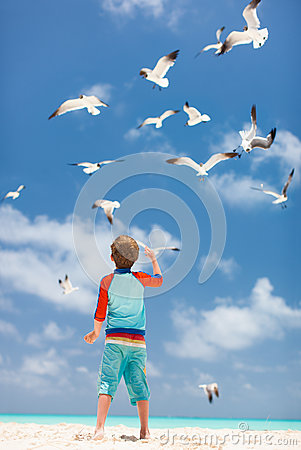 Boy and seagulls