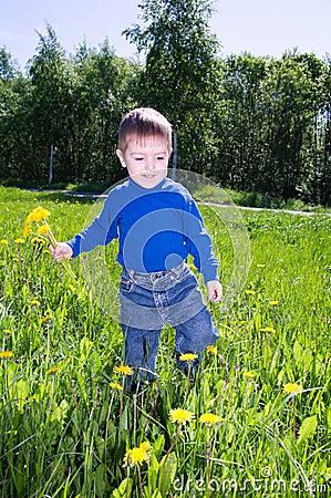 Boy sits on dandelion;.