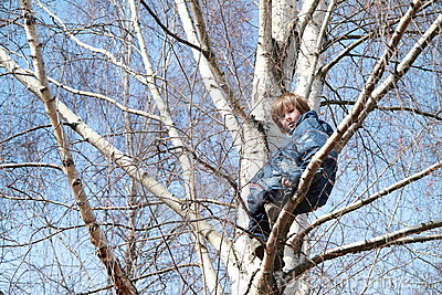 Boy sitting on the tree