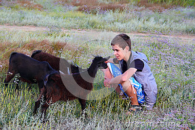 Boy with small goats