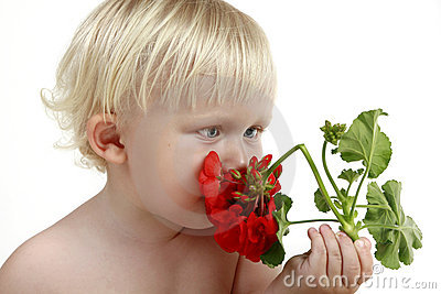 Boy smells a red flower