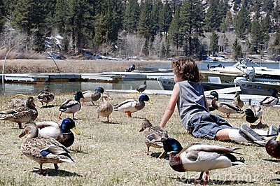 Boy on stomach in field of ducks