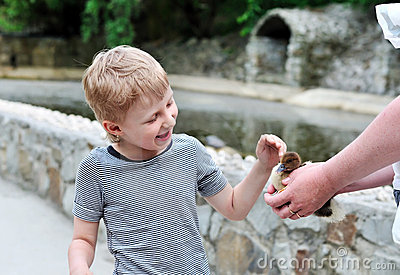 Boy stroking duckling