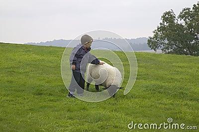 A Boy stroking a sheep