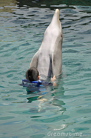 Boy Swimming with Bottlenose Dolphin Editorial Photo
