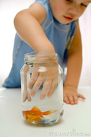 Free Boy Todder Hand In Fish Bowl Stock Photography - 4383902