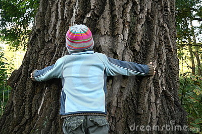 Boy trying to embrace huge old tree