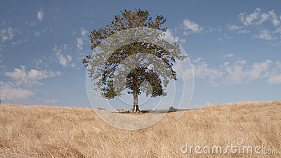 Boy Under Tree In Field Free Public Domain Cc0 Image