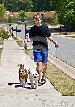 Boy Walking Dogs