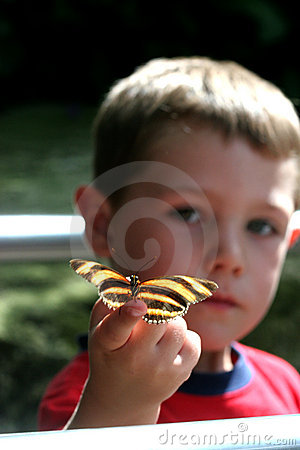 Free Boy With Butterfly Stock Images - 5336274