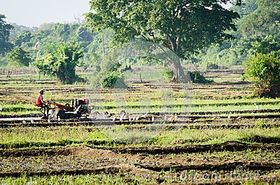 Boy working with a motor plow in rice fields Editorial Photography