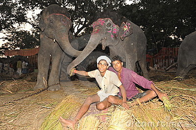 Boys and elephants Editorial Photo