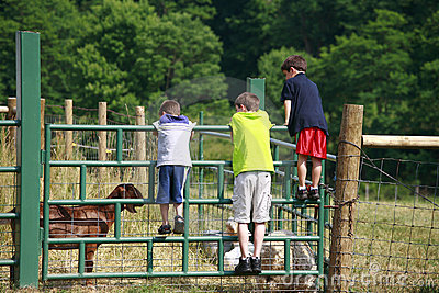 Boys Looking At Goats