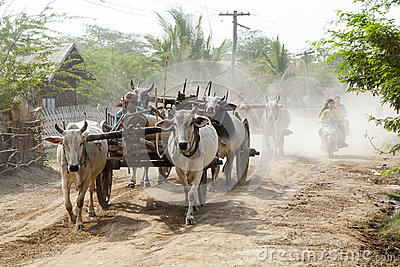 Cattle Cart on Dirt Road Editorial Photo