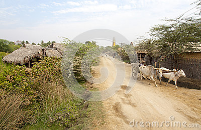 Cattle Cart on Dirt Road Editorial Photography