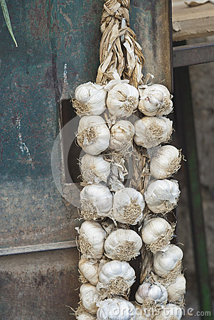 Braids of garlic
